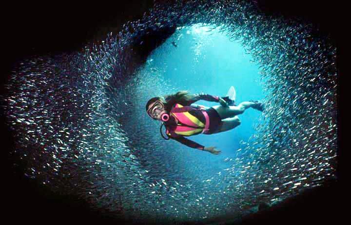 All You Want to Know About Scuba Diving